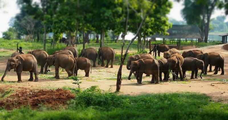 Le parc national de Yala Sri-Lanka